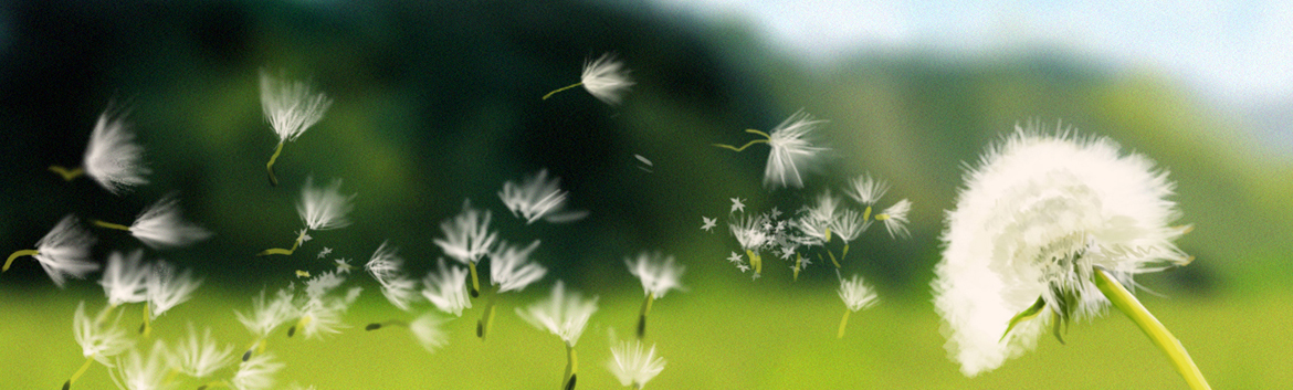 blowing-dandelion1170x